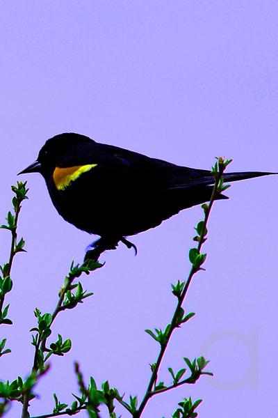 Yellow Tipped Bird
