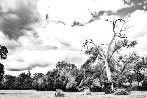 Black and White Tree Line